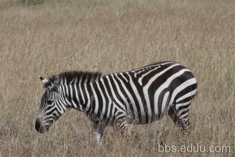 【走遍天下】+非洲观动物大迁徙
