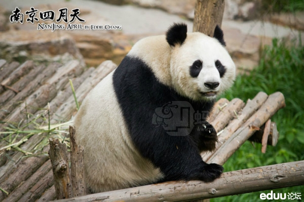 【我在南京】之红山森林动物园!_金陵茶馆-南京家长帮