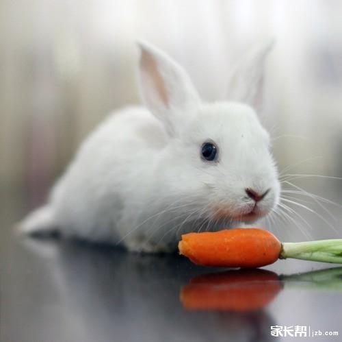 小白兔是爱吃萝卜和青菜的