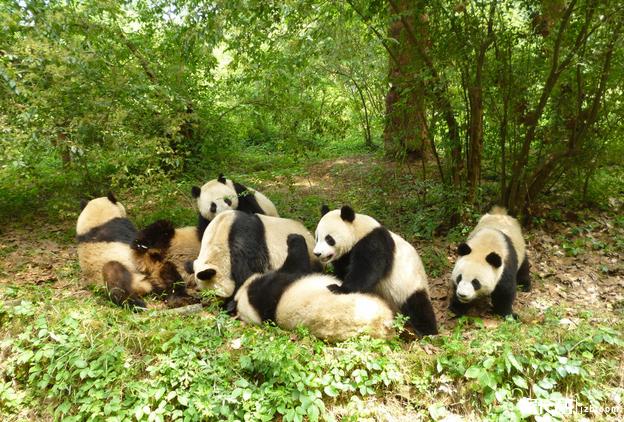珍稀野生动物救护和
