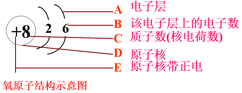 即核外电子数为8,那么氧原子的电子层是如何排布的呢