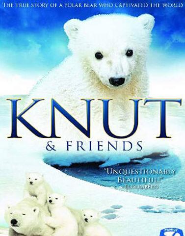 一只萌到心塞的小北极熊knut的故事,看得眼泪忍不住流图片
