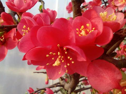 康之园 头像 风景 唯美一枝梅花 > 腊梅花图片大全大图唯美        腊