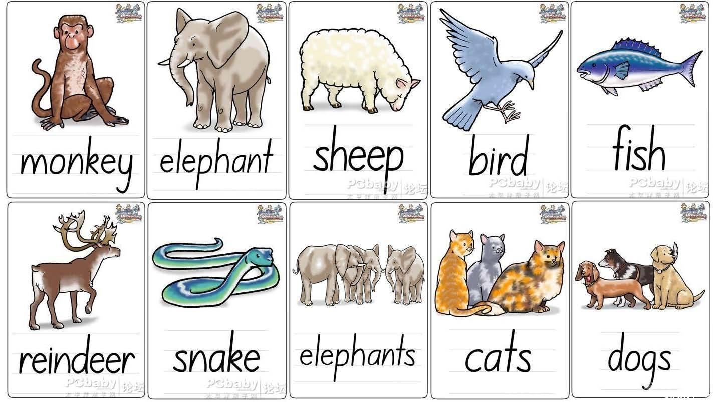 动物英文单词-20个英语动物单词
