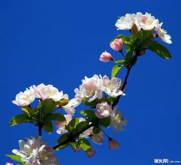 【足迹记录】春天里和花儿有个约会