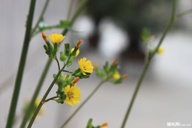 小野花也有春天!人生何处不励志啊!
