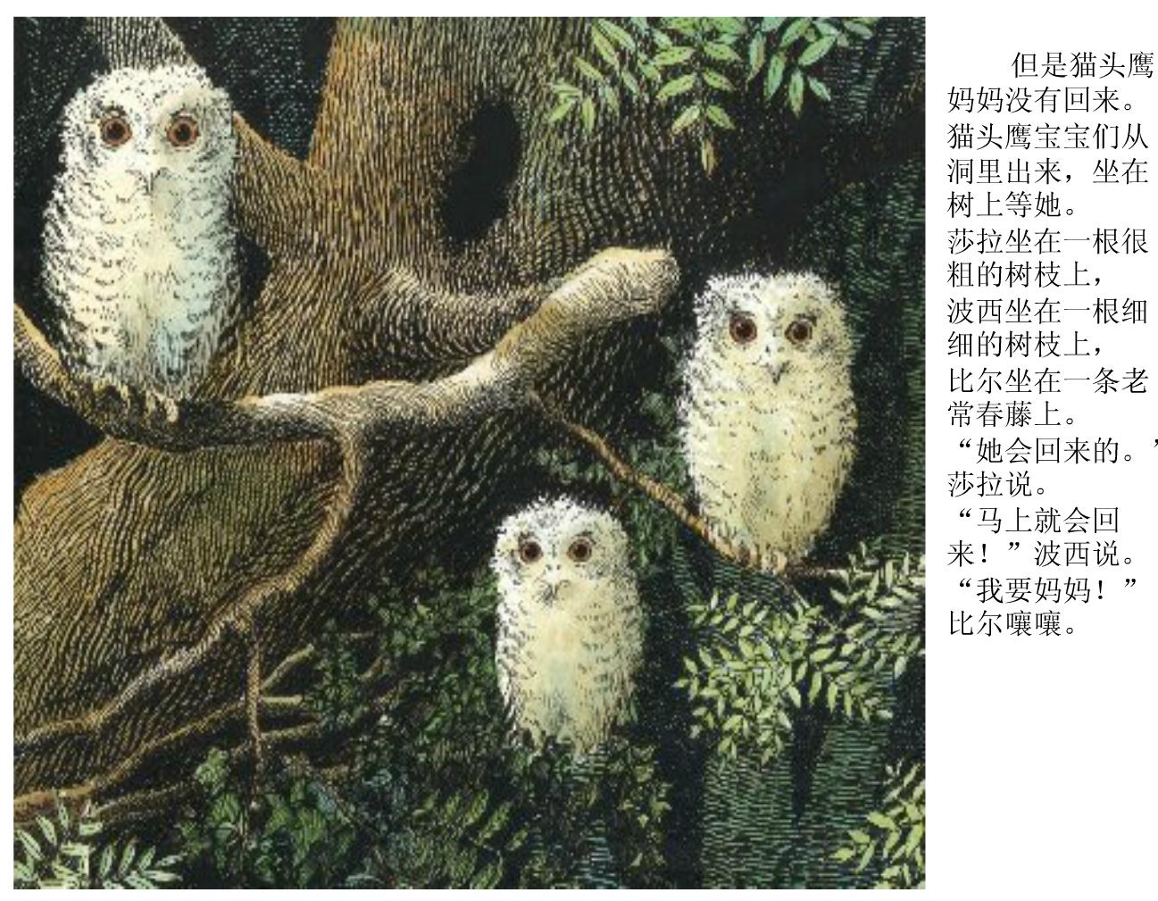 儿童绘本故事分享:《小猫头鹰》