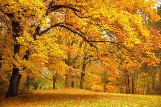 秋天的诗词_林彪诗词_廉政诗词硬笔书法作品