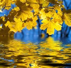 关于秋的诗词_关于诗词的手抄报_月季花诗词