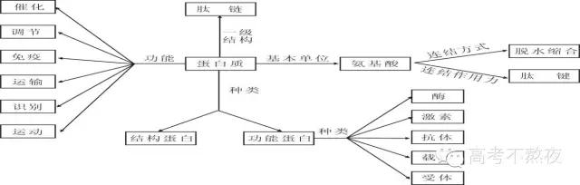 以蛋白质的结构和功能为中心构建生物学概念图