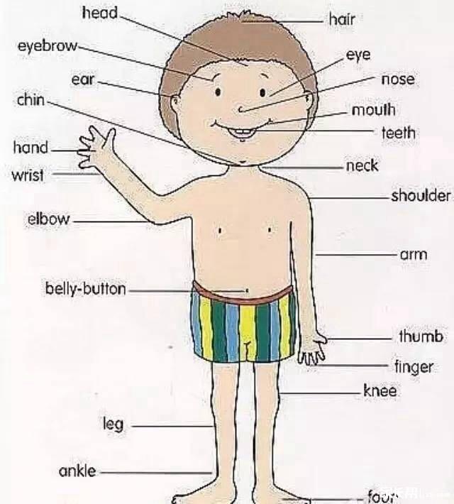 人体各个部位的英文名称及配图