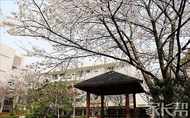 学校的樱花.jpg