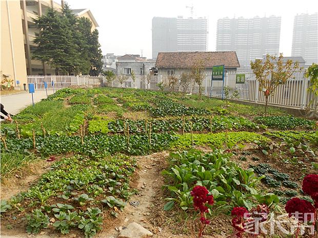 我眼中不一样的书信【临安市锦城第三初级中学感恩初中600学校字图片