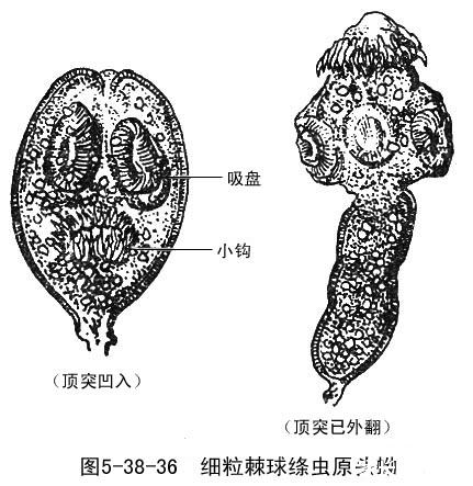 人體頭骨肌肉結構圖