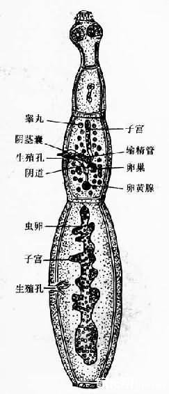 啮齿动物骨骼结构图