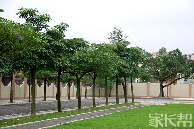 校园绿化.jpg