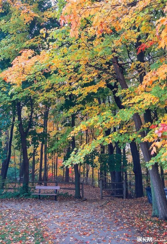 秋日的多伦多