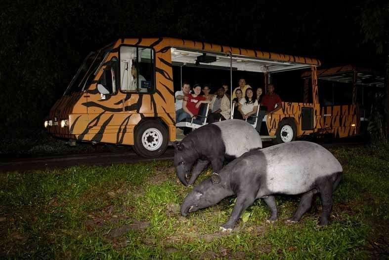 夜间动物园小火车上.jpg