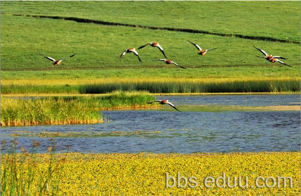 木兰围场有四个景区:塞罕坝国家森林公园(属河北),御道口草原森林风景