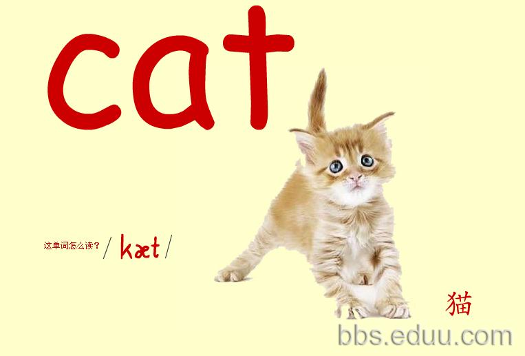 看图识物记英语单词之彩色大卡——动物篇(一)彩