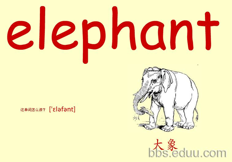 看图识物记英语单词之彩色大卡——动物篇(二)彩