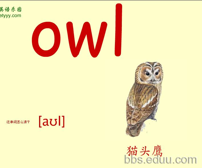 看图识物记英语单词之彩色大卡——动物篇(三)