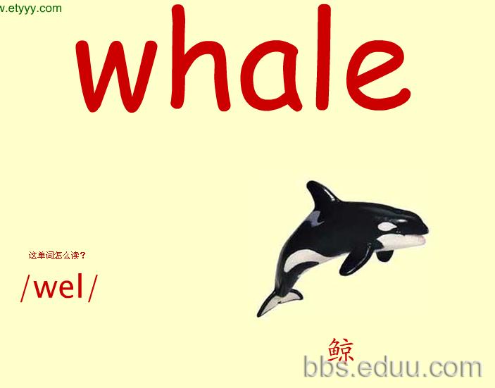 看图识物记英语单词之彩色大卡——动物篇(四)