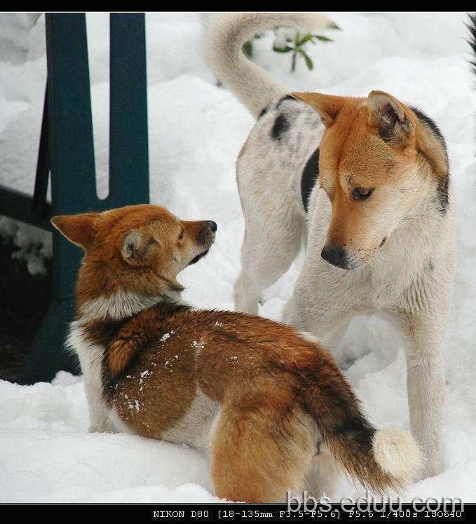 动物雪景动态图片